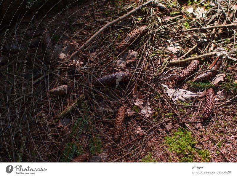 take my darkness into light. Natur Pflanze Wald Umwelt dunkel Herbst Frühling braun liegen Boden Moos Rest gefallen Waldboden Tannennadel Zweige u. Äste