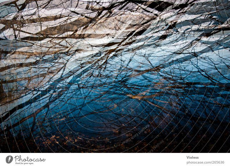 In der Tiefe Wasser Seeufer dunkel nass blau Ast Zweige u. Äste Reflexion & Spiegelung Doppelbelichtung Farbfoto Außenaufnahme Experiment Menschenleer Tag