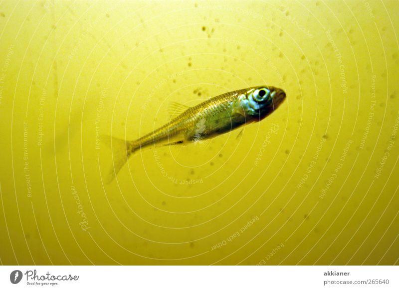 Was guckst du??? Natur Wasser Tier Umwelt Wildtier natürlich nass Fisch Urelemente nah Aquarium