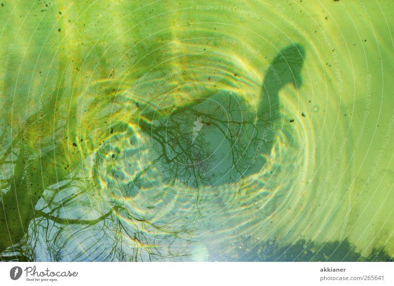 88 | Schattenseiten Natur Wasser Tier Umwelt Vogel natürlich nass Urelemente Schwan