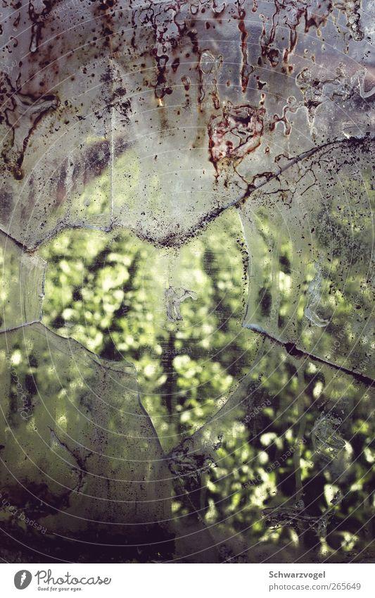 Lucy was here grün Pflanze Umwelt Zufriedenheit Glas Feld Klima Wachstum Zukunft Wandel & Veränderung Afrika Vergangenheit Fensterscheibe Rettung Klimawandel