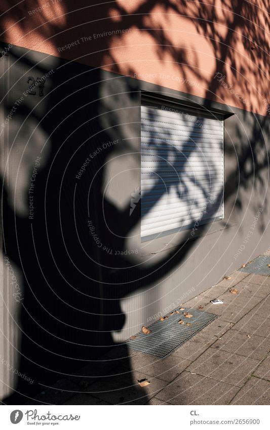 schatten eines baums Sonnenlicht Herbst Schönes Wetter Baum Menschenleer Haus Mauer Wand Fenster Wege & Pfade Rollo Schattenspiel Privatsphäre Farbfoto