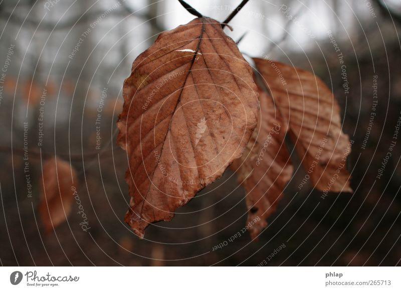 Altes Laub taufrisch Pflanze Herbst Nebel Baum Blatt Wald Gefühle Stimmung Warmherzigkeit Sympathie Freundschaft Romantik schön friedlich Güte Gelassenheit