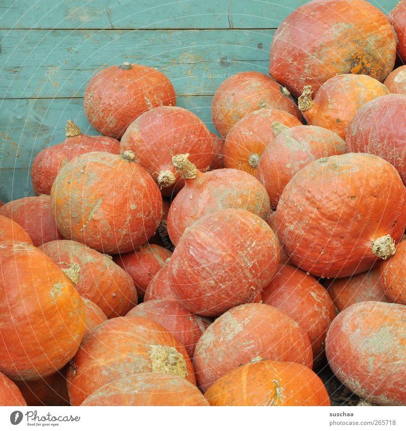 viele kürbisse auf einem haufen Herbst rund saftig Ernährung Nahrungsmittel Frucht Gemüse Kürbis Landwirtschaft Ackerbau Ernte orange lagern Farbfoto