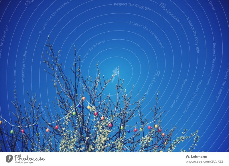 Frohe Ostern! Himmel Natur Baum Pflanze ruhig Umwelt Landschaft Frühling Luft Schönes Wetter