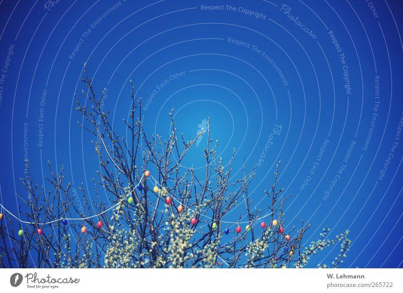 Frohe Ostern! Himmel Natur Baum Pflanze ruhig Umwelt Landschaft Frühling Luft Ostern Schönes Wetter