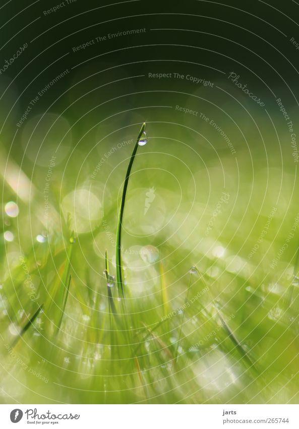 zeit Natur Pflanze Wassertropfen Schönes Wetter Gras Wiese Gesundheit frisch glänzend natürlich grün Farbfoto Außenaufnahme Nahaufnahme Detailaufnahme