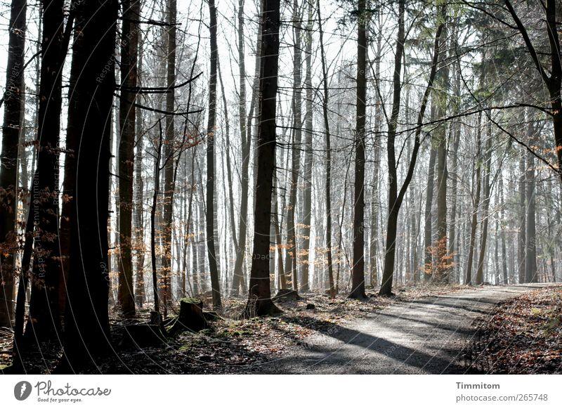 Ostern - Aufbruch Natur grün Pflanze Baum Wald Umwelt Gefühle Frühling grau Zufriedenheit authentisch ästhetisch beobachten einfach Vertrauen achtsam