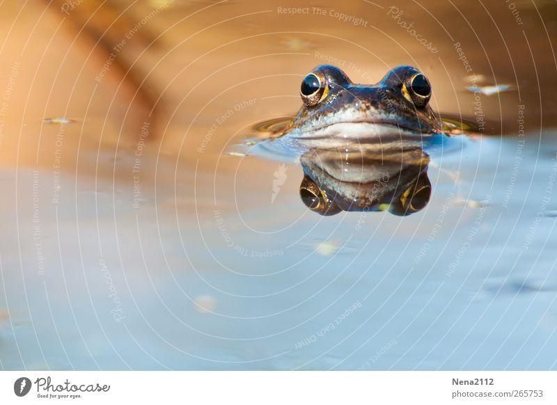 Morgääähhnnn! Natur blau Wasser Sommer Tier Umwelt Auge Wiese Kopf See braun Schwimmen & Baden Feld Wildtier nass Coolness