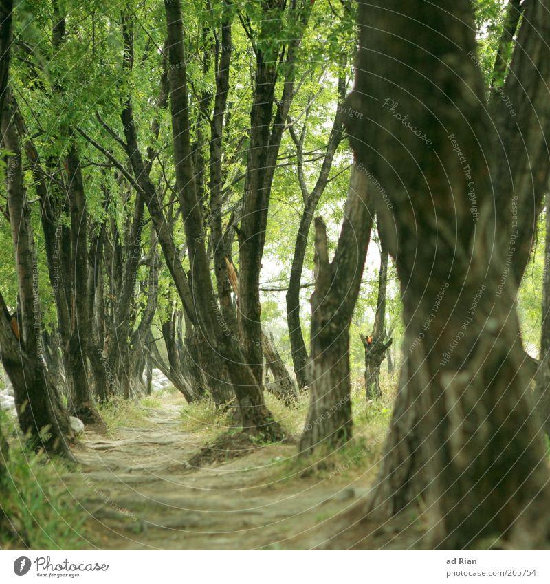 Dickicht Baum Park Wald Erholung Unterholz Wege & Pfade Durchgang Farbfoto Froschperspektive