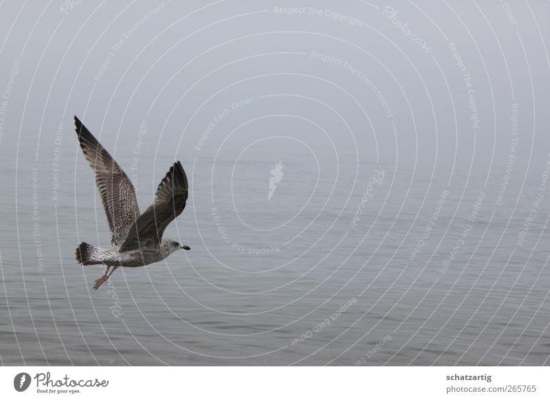 Frei wie ein Vogel Umwelt Natur Luft Wasser schlechtes Wetter Nebel Ostsee Meer Tier Flügel Möwe 1 frei grau Gelassenheit ruhig Glaube Traurigkeit Sehnsucht