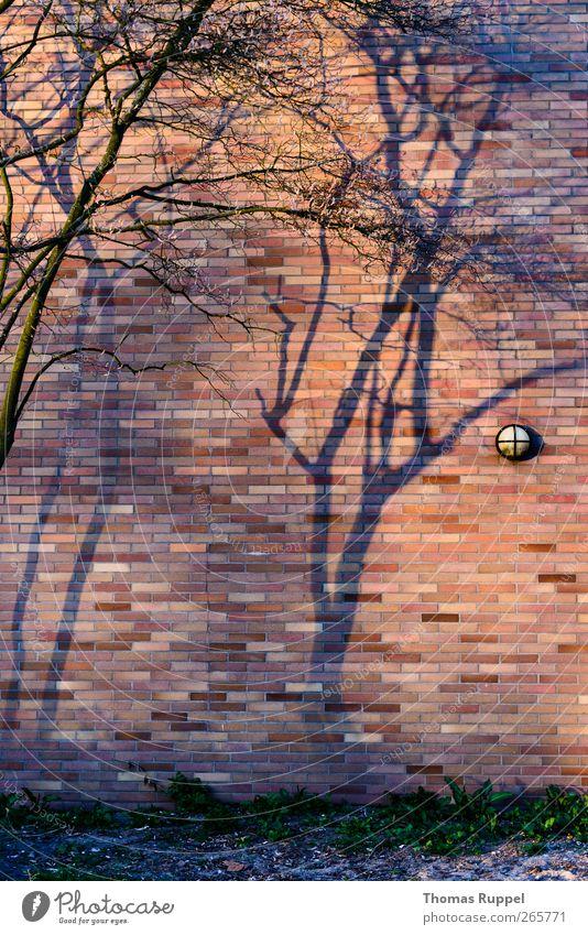 Schatten an der Wand Pflanze Schönes Wetter Baum Menschenleer Industrieanlage Fabrik Mauer Fassade Stein Beton authentisch Kraft Vertrauen Zufriedenheit