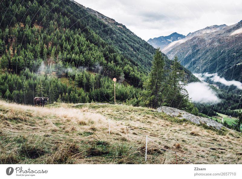 Zwieselstein | E5 Abenteuer wandern Natur Landschaft Wolken Herbst Wald Alpen Berge u. Gebirge Kuh nachhaltig natürlich grün Einsamkeit Idylle Umwelt