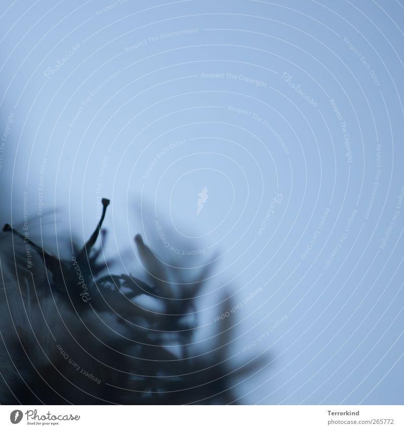 oh.boy Löwenzahn Schirm Schirmchen fliegen verteilen verteilt Pflanze säen Sommer warten Zeit Wachstum Fortpflanzung blau bläulich dunkel mystisch Unschärfe nah