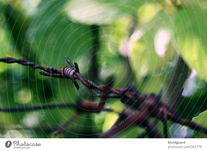Edge Of Paradise Garten Natur Landschaft Pflanze Sommer Schönes Wetter Park Metall alt bedrohlich fest schön stachelig braun grün rot schwarz silber Schmerz