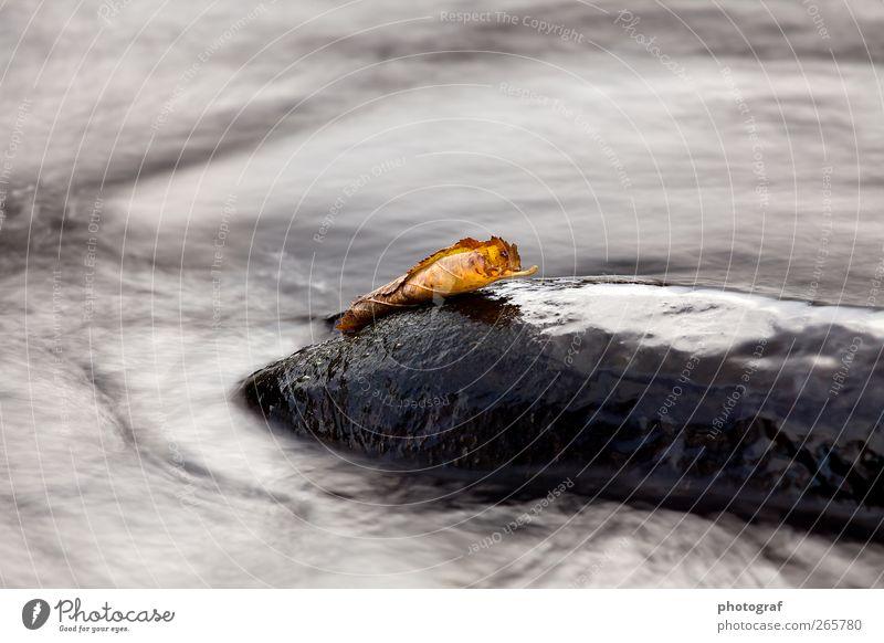 Wasser Leben Herbst Gras Fluss Stein Tag fließen Bewegungsunschärfe