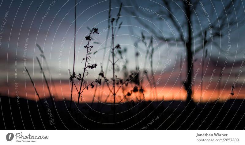Sunset Natur Landschaft Pflanze Himmel Sonnenaufgang Sonnenuntergang Sträucher orange Farbfoto Außenaufnahme Menschenleer Textfreiraum unten Abend Dämmerung