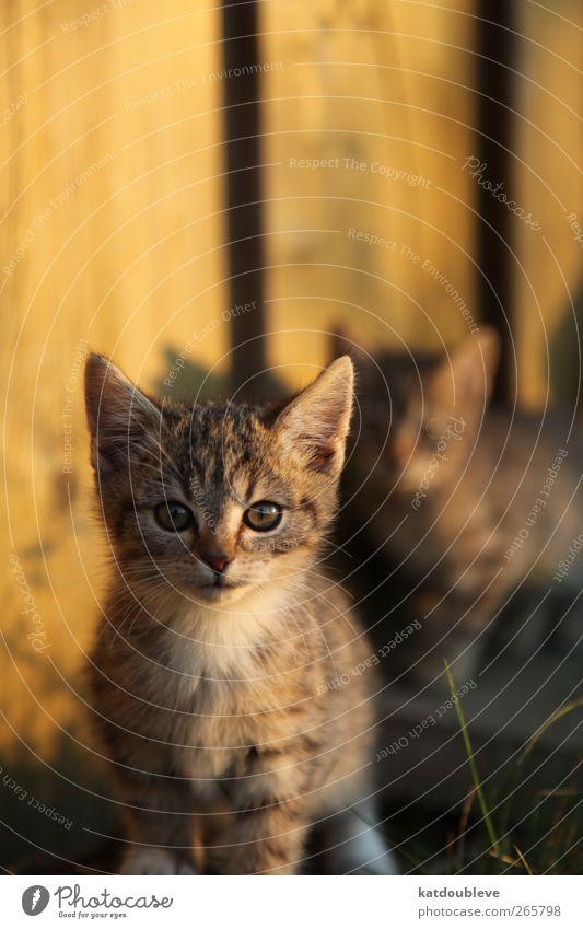 le chaton Katze Natur schön Tier Tierjunges Umwelt Leben Wiese Spielen Holz Garten gehen Zusammensein wild Tierpaar ästhetisch