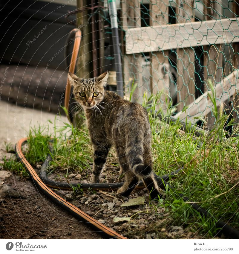 Mieze Sommer Garten Wiese Katze 1 Tier niedlich Angst Gartenschlauch Gartentor Landleben ländlich Schüchternheit Farbfoto Außenaufnahme Menschenleer
