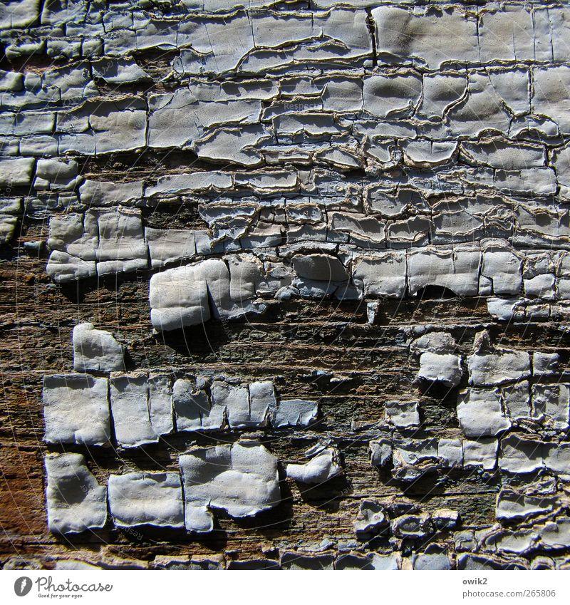 Unterschicht Kunst Kunstwerk Gemälde alt fest nah natürlich trashig trist trocken grau weiß bizarr Desaster Vergänglichkeit verlieren Verzweiflung Verfall