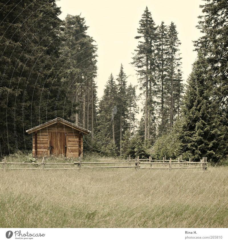 Holzhütte Natur grün Ferien & Urlaub & Reisen Sommer ruhig Wald Erholung gelb Landschaft Wiese Idylle einfach Schönes Wetter Hütte Tanne Geborgenheit