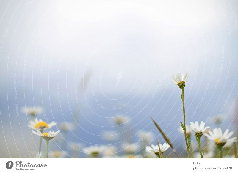 die Wiesn ruft.... Natur blau Pflanze weiß Sommer Blume Umwelt Wiese Gras Frühling Blüte Garten Geburtstag Blühend Schönes Wetter Hochzeit