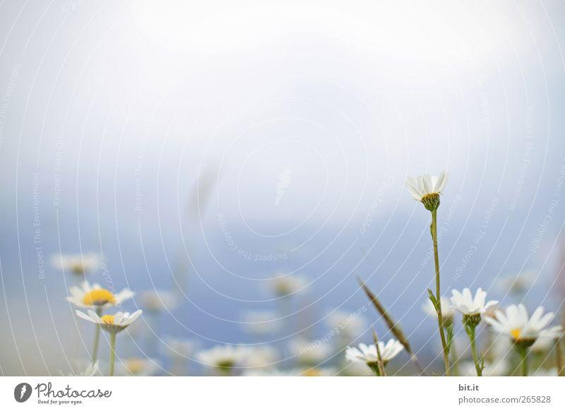 die Wiesn ruft.... Valentinstag Muttertag Hochzeit Geburtstag Umwelt Natur Pflanze Wolkenloser Himmel Frühling Sommer Schönes Wetter Blume Gras Blüte Garten