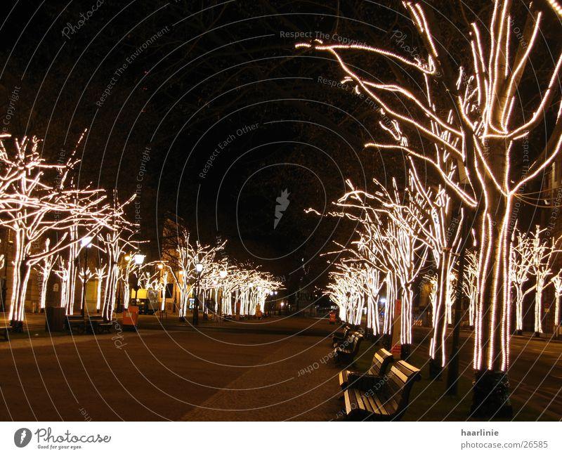 weihnacht unter den linden Baum Stadt Berlin Kunst Europa Allee Sehenswürdigkeit Linde Unter den Linden