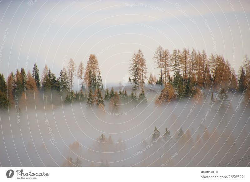 Dense fog above the valley, in autumn. In the Alps in Austria. Natur Landschaft Himmel Nebel Tanne Fichtenwald Wald Alpen Berge u. Gebirge Kalkalpen