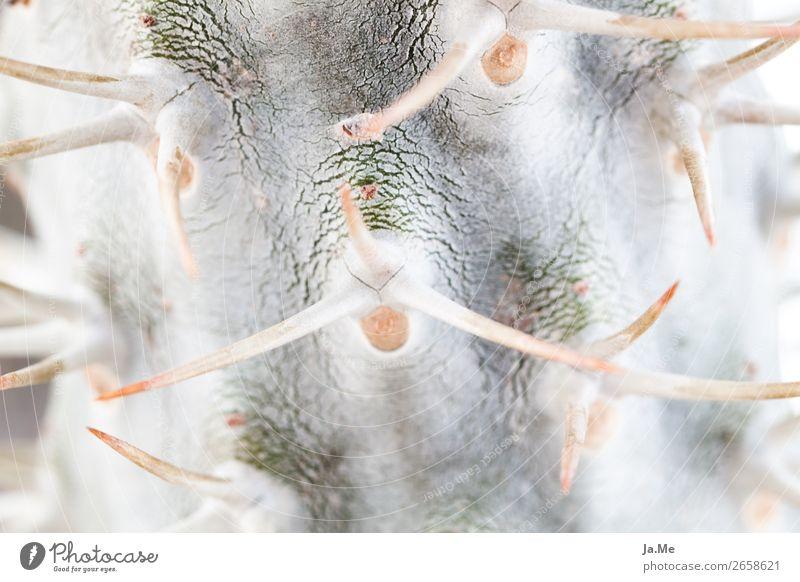 Gruß vom Kaktus Natur Sommer Pflanze grün weiß Umwelt Garten grau Park Spitze Wüste exotisch Botanik stachelig Stachel