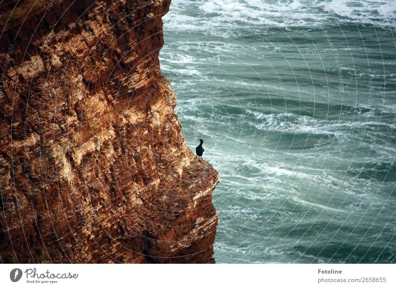 kleine Pause Natur blau Wasser weiß Landschaft Meer Erholung Tier schwarz Umwelt natürlich Küste Vogel braun Felsen frei
