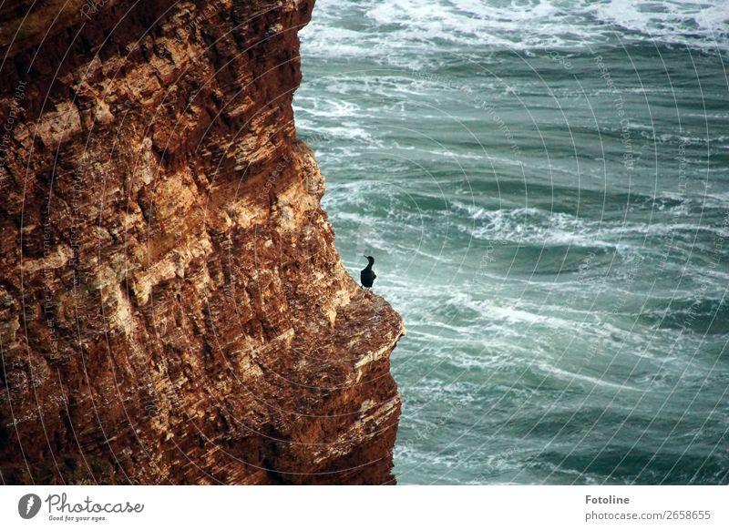 kleine Pause Umwelt Natur Landschaft Tier Urelemente Erde Wasser Wellen Küste Nordsee Meer Insel Wildtier Vogel 1 frei nass natürlich blau braun schwarz weiß