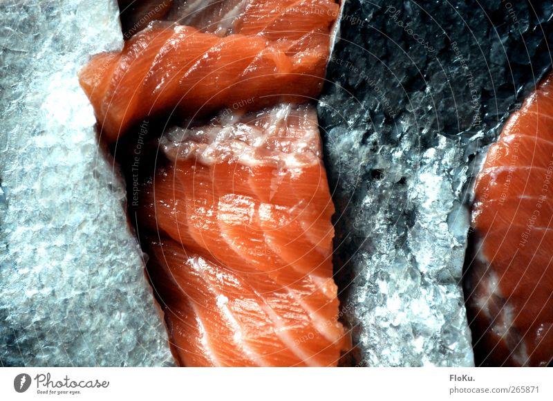 Fischfabrik blau rot Ernährung Lebensmittel Müll Teile u. Stücke feucht Rest Schuppen Lachs Totes Tier