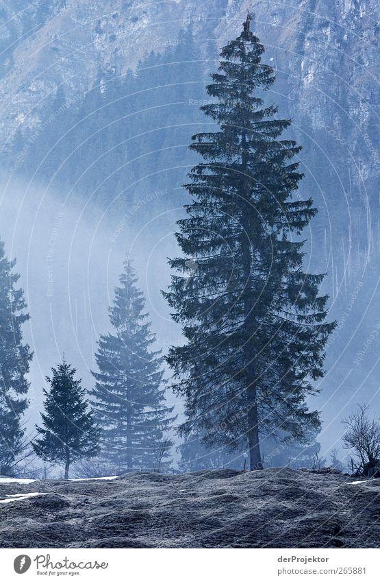 Fichte blau: am Morgen Natur Baum Wald Landschaft Gefühle Nebel authentisch Romantik Neugier Hügel Alpen Dunst