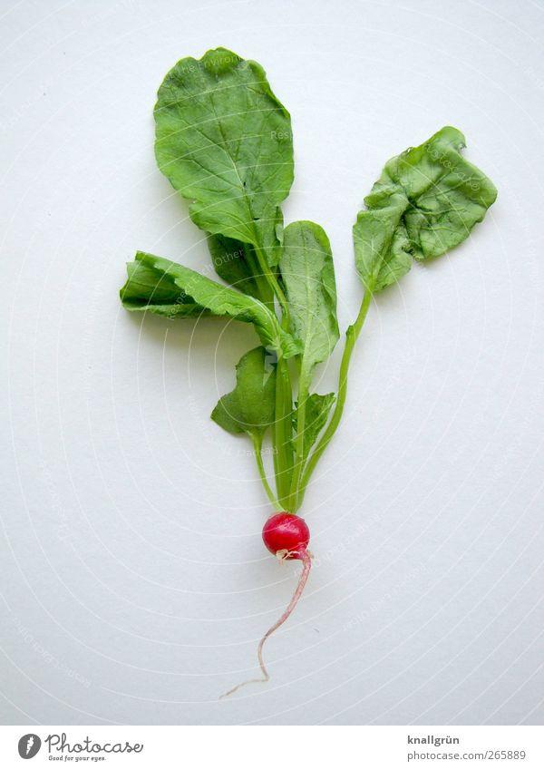 Radieschen Lebensmittel Gemüse Ernährung Bioprodukte Vegetarische Ernährung Diät Gesundheit frisch lecker natürlich rund grün rot weiß genießen Natur Blatt