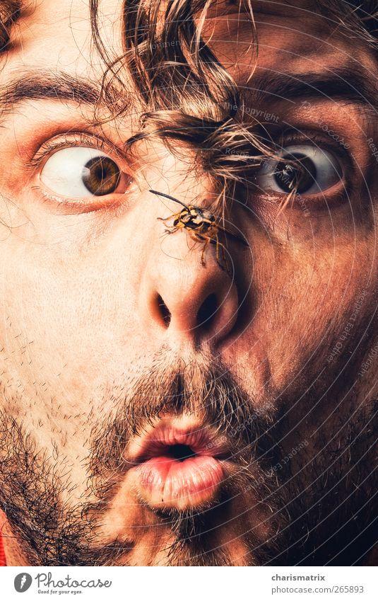 Augenblick Mensch Jugendliche Gesicht Erwachsene Auge maskulin 18-30 Jahre Neugier Bart
