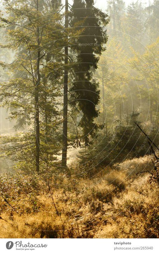 magischer Morgen schön Sonne Tapete wandern Umwelt Natur Landschaft Sonnenaufgang Sonnenuntergang Herbst Wetter Schönes Wetter Nebel Baum Blatt Wald ästhetisch