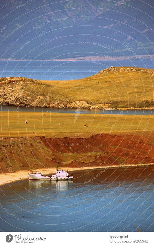 einmal zum baikalsee und zurück Natur blau Pflanze Tier Umwelt Landschaft Küste See Wasserfahrzeug braun Insel Kuh Fischer Sibirien