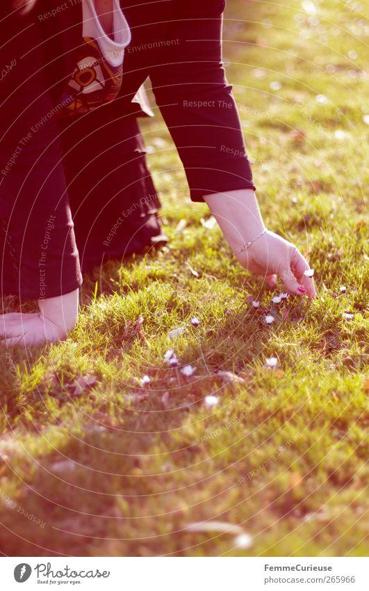 Looking for daisies II. Mensch Frau Jugendliche Hand Mädchen Erwachsene Erholung Wiese feminin Gras Junge Frau Glück Kopf Stimmung Zufriedenheit 18-30 Jahre