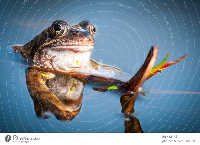 Suche Mädchen zum Küssen oder mehr... Natur Tier Wasser Schönes Wetter Pflanze Teich See Bach Wildtier Frosch 1 Schwimmen & Baden beobachten warten nass blau