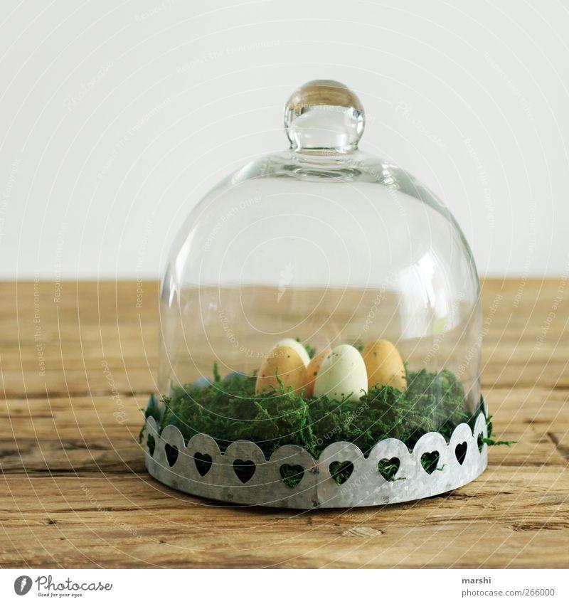 für nächstes Ostern ist vorgesorgt Lebensmittel Ernährung Wohnung Innenarchitektur Dekoration & Verzierung braun gelb grün Osternest Osterei Ei Vakuum