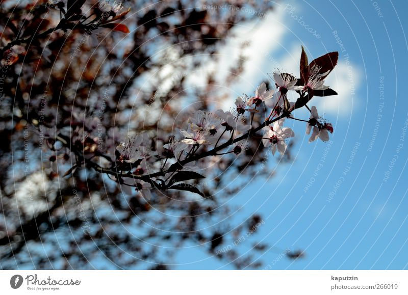 April Natur Pflanze Luft Himmel Wolken Sonnenlicht Frühling Klima Wetter Schönes Wetter Baum Blume Sträucher Blatt Blüte Nutzpflanze Garten Park blau mehrfarbig