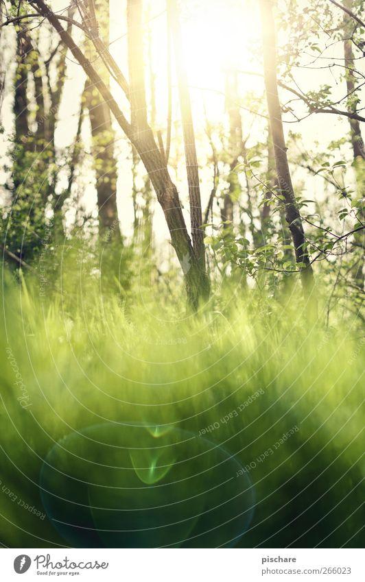 Frühling Natur Sonne Baum Gras Wärme grün Farbfoto Außenaufnahme Tag Reflexion & Spiegelung Lichterscheinung Sonnenlicht Sonnenstrahlen Schwache Tiefenschärfe