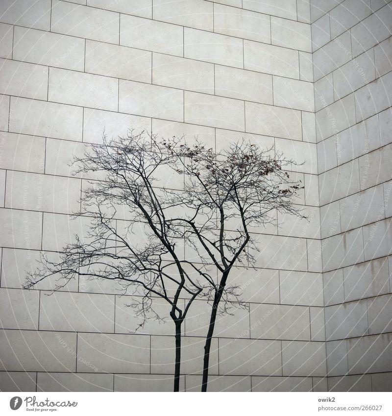 Platzangst Pflanze Baum Ast Zweige u. Äste Bauwerk Gebäude Architektur Mauer Wand Fassade Sandstein einfach stehen Wachstum warten bedrohlich eckig groß