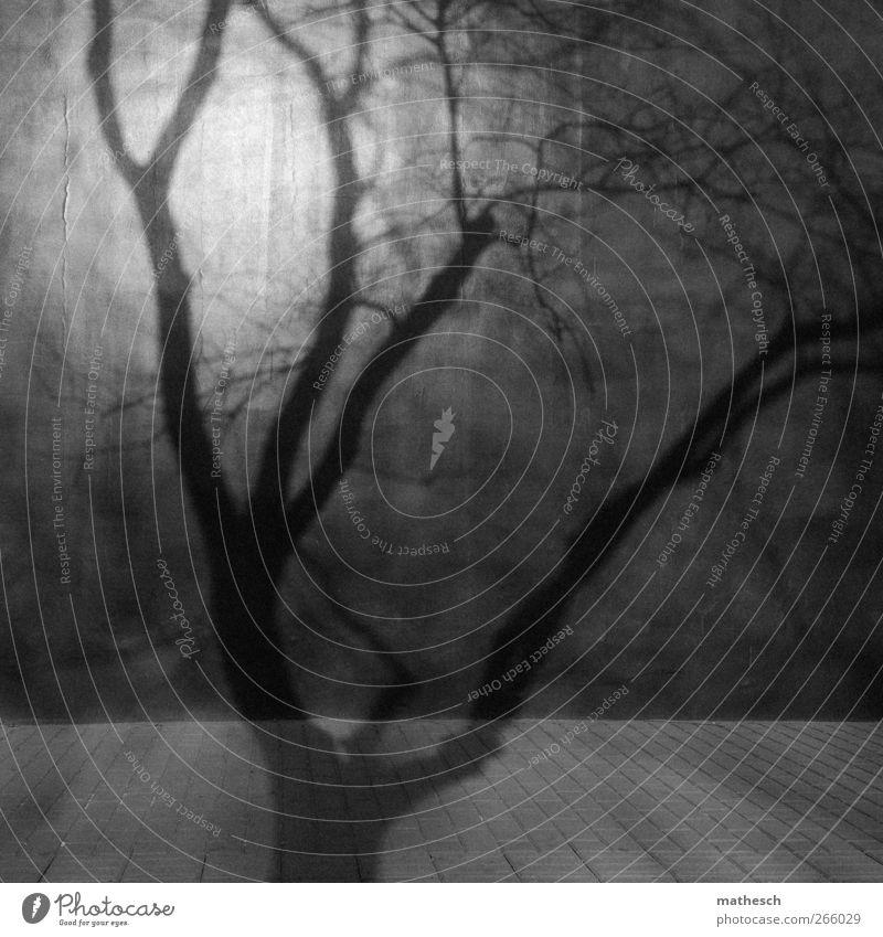 laublos Baum Mauer Wand schwarz weiß Strukturen & Formen Ast Zweige u. Äste Bürgersteig Stein Schatten Schattenspiel Schwarzweißfoto Außenaufnahme Menschenleer