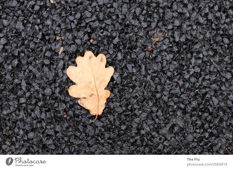 Verloren in der Asphaltwüste Pflanze Herbst Blatt Straße warten trocken braun schwarz Einsamkeit elegant Endzeitstimmung Umweltverschmutzung Umweltschutz