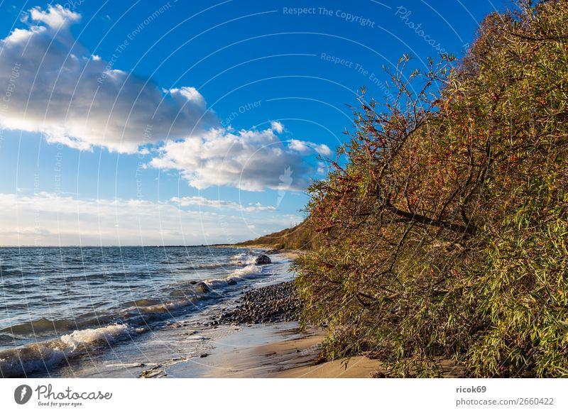 Ostseeküste bei Klintholm Havn in Dänemark Ferien & Urlaub & Reisen Natur blau grün Wasser Landschaft Baum Meer Wolken Strand Herbst Küste Tourismus Stein
