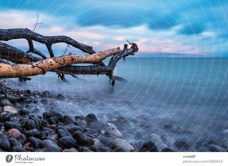 Ostseeküste auf der Insel Moen in Dänemark Ferien & Urlaub & Reisen Natur blau Wasser Landschaft Meer Wolken Wald Strand Herbst Küste Tourismus Stein Felsen