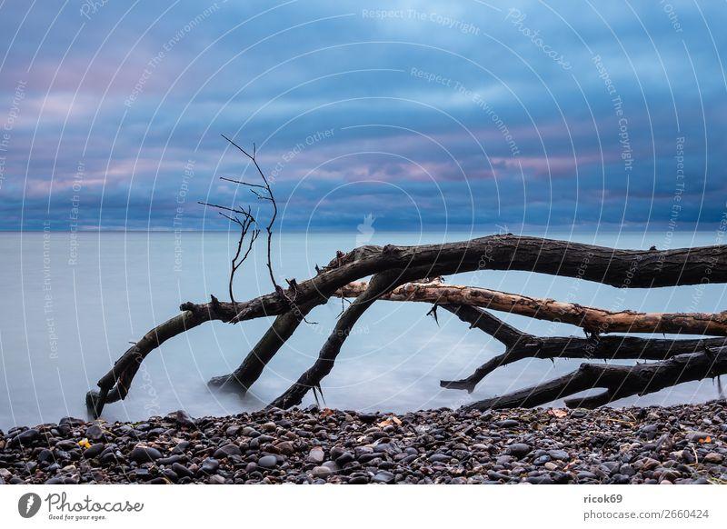Ostseeküste auf der Insel Moen in Dänemark Ferien & Urlaub & Reisen Natur blau Wasser Landschaft Baum Meer Wolken Strand Herbst Küste Tourismus Stein Idylle
