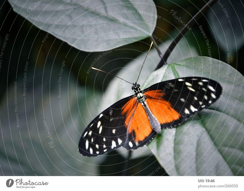 Keine Katze..................................... schön rot Tier schwarz ruhig Erholung Wärme grau orange warten elegant ästhetisch Flügel niedlich Schmetterling